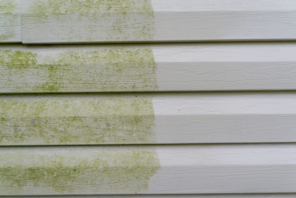 Mold on siding